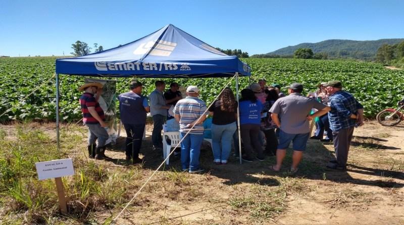Dia de Campo sobre Agricultura Conservacionista em Sertão Santana