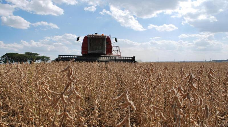 colheita soja 26 12