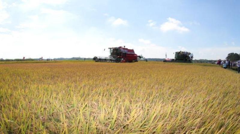 lavoura arroz 9 1 19