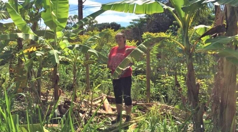 Agricultura orgânica financiada por consumidores ganha força no DF