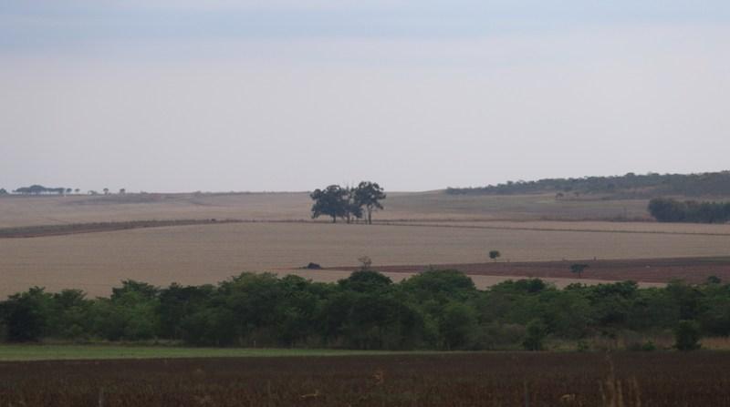 cerrado agricultura elio rizzo