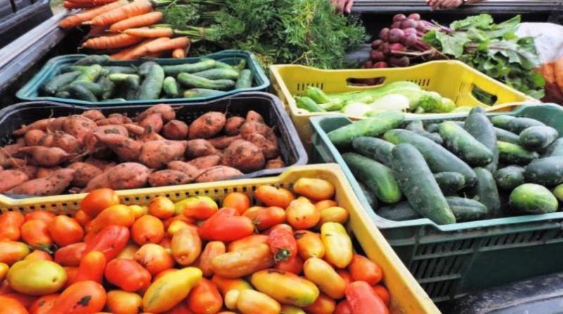 organicos alimentos 25 2 19