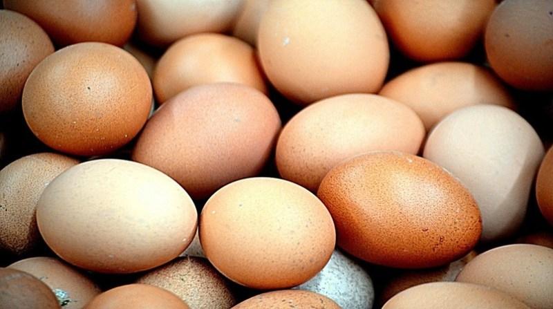 ovos pixabay 8 2 19