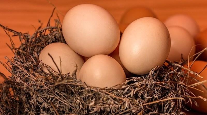 ovos vermelhos pixabay 22 2 19