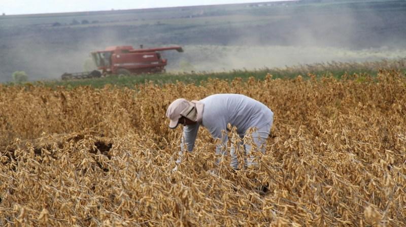 soja soja colheita 1 2 19 elio rizzo