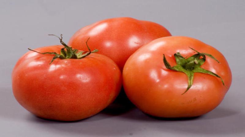 tomate paulo lanzetta 14 2 19