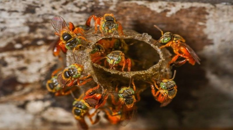 jardins do mel acervo - abelhas prefeitura de curitiba