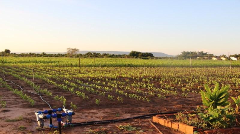 oeste baiano lavoura irrigada