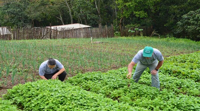 trabalhadores rurais lavoura rj ag ibge Camille Perissé