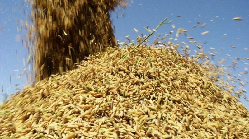 arroz arroz 17 4 19