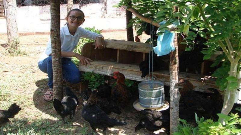 galinha frago coletor fernando sinimbu embrapa