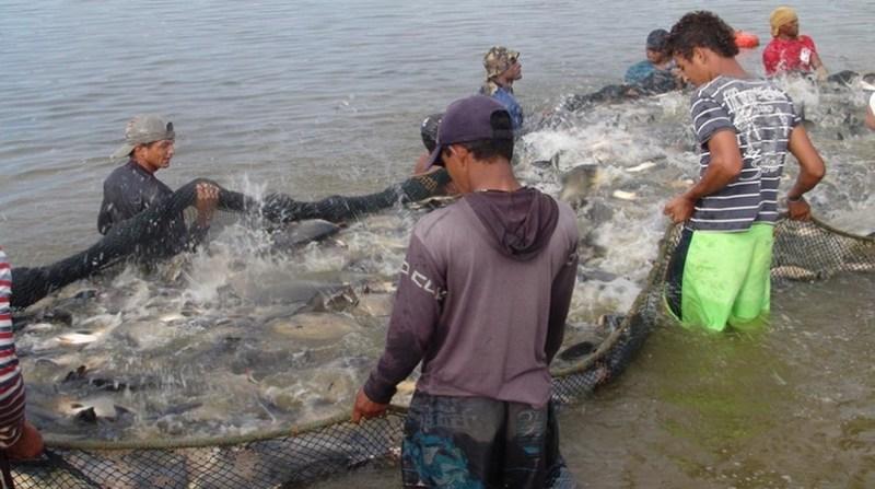 pesca pescadores governo tocantins