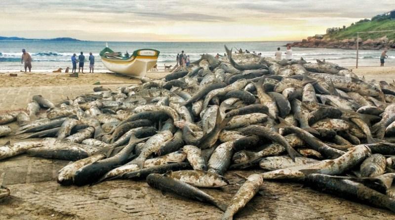 tainha pesca praia prefeitura laguna de sc