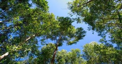 Seminário debate políticas para o desenvolvimento florestal em Goiás