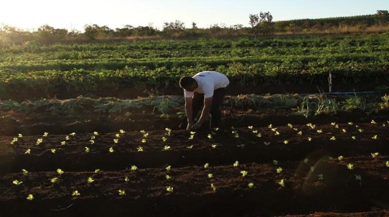 hortalicas elio rizzo 13 6 19