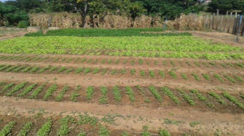 agricultura piaui 5 7 19
