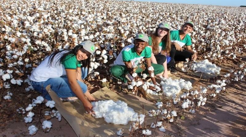 algodao jovens estudantes plantacao de algodao oeste bahia abapa