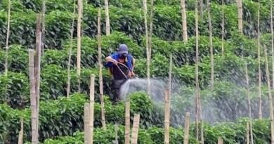 Governo estabelece normas para uso de novos defensivos agrícolas