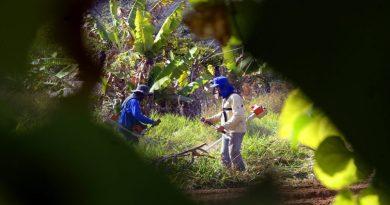 Agro do Distrito Federal gera cerca de 30 mil empregos