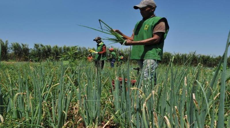 Câmara: Técnico agrícola poderá entrar no Minha Casa, Minha Vida