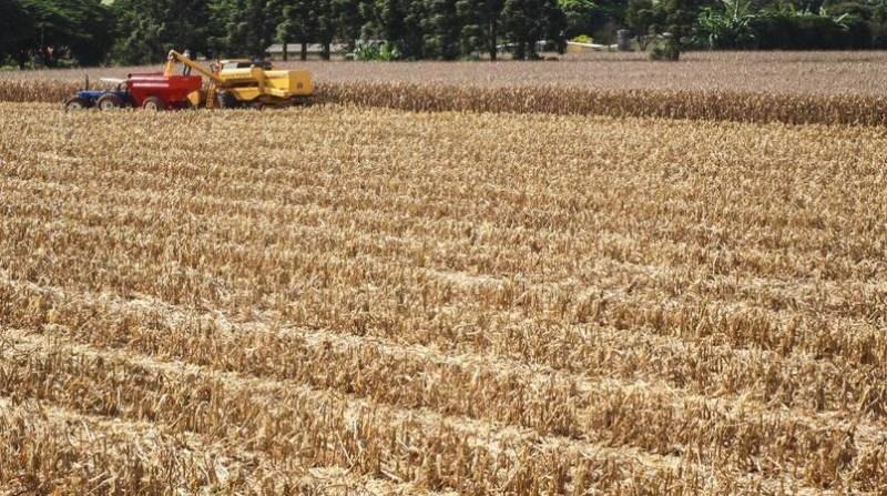 milho colheita maquina campo agencia estadual de noticias do parana