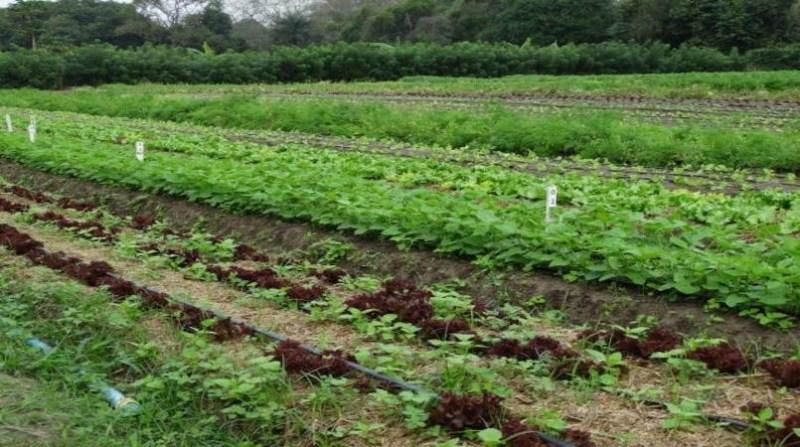 produção organica lavoura de hortaliças ana lucia ferreira embrapa