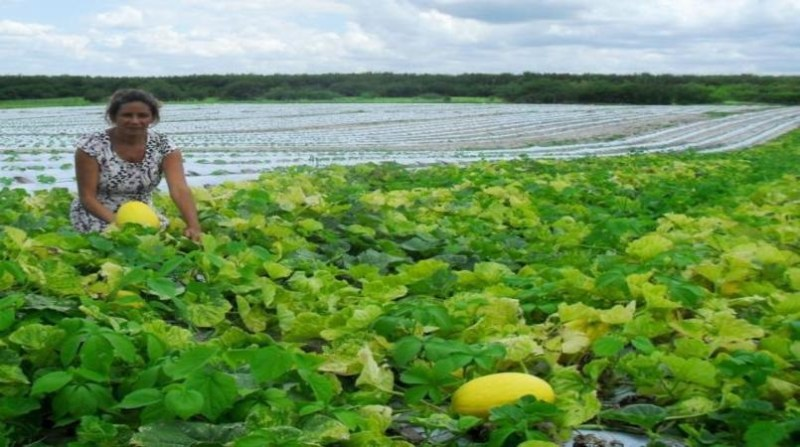 agricultura familiar melao incra