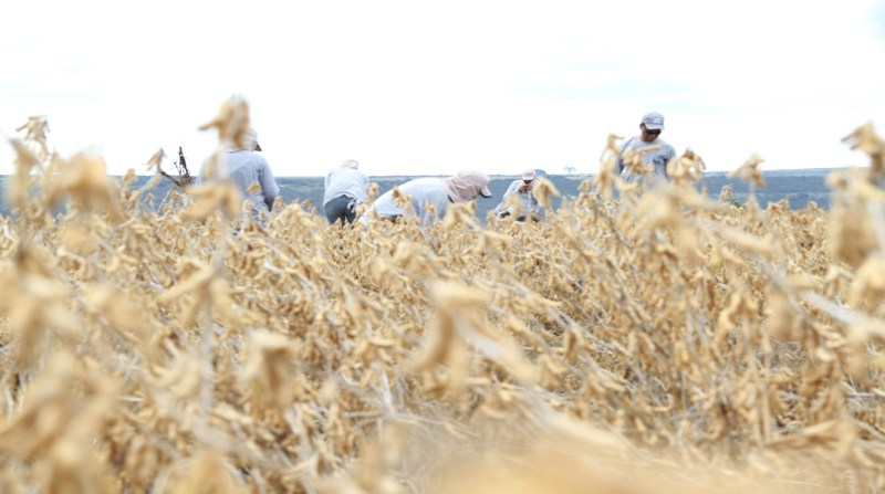 trabalhador lavoura agricultura elio rizzo