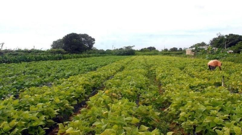 agricultura familiar lavoura agencia brasil