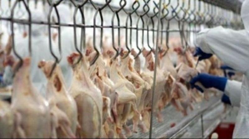 carne de frango agenci brasil 14 11 19