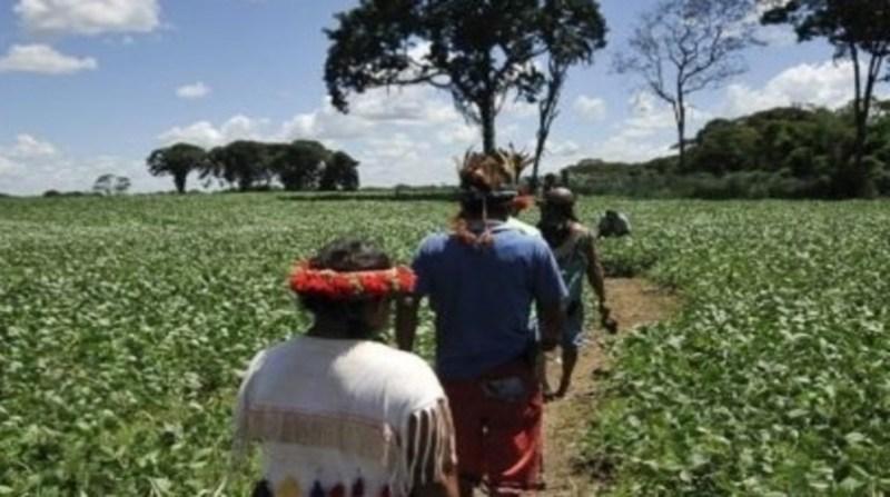 indios 1 plantacao soja ebc