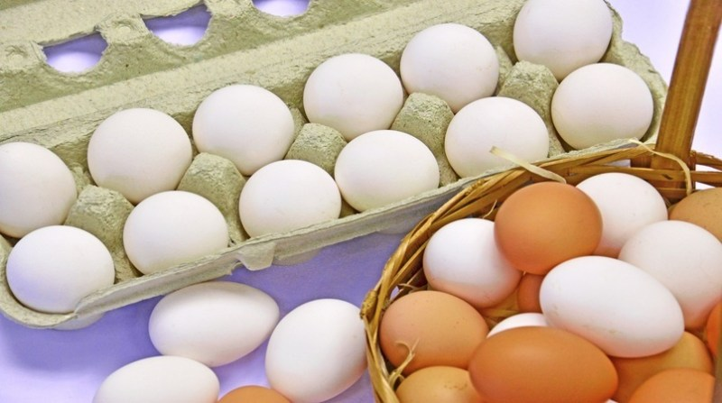 ovos embraapa 16 12 19
