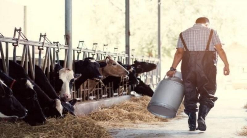 produtor de leite de costas caminhando divulgacao