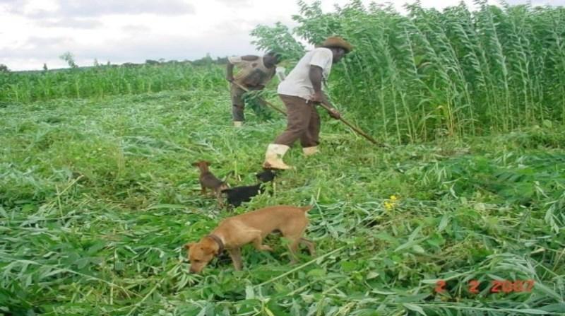 agricultura familiar comunidade quilombola mineiros goias agostinho didonet embrapa