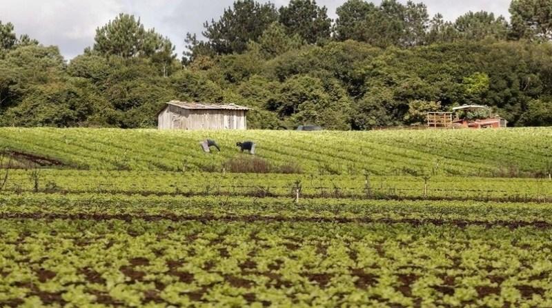 agricultura familiar parana José Fernando Ogura aen