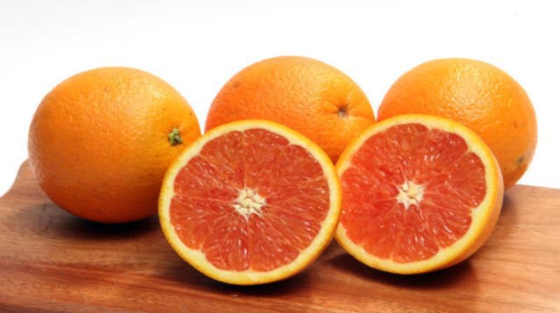 laranja 8 2 19 paulo lanzetta embrapa