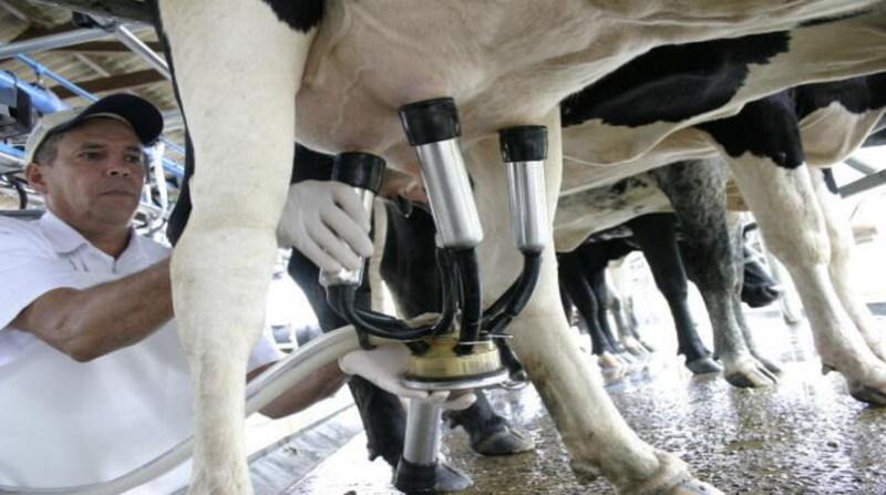 leite ordenha ordenhador embrapa alcides okubo filho 13 01 2020
