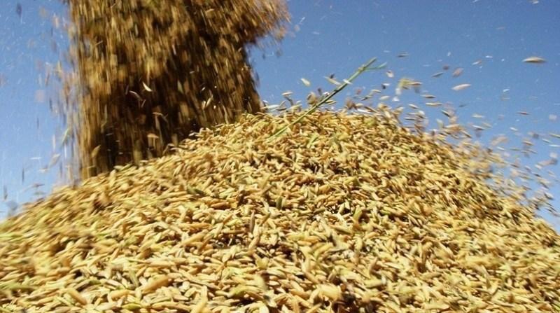 arroz arroz irga gov rs 13 02 2020