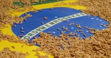 Peru e Iraque lideram compras de arroz beneficiado do Brasil nos últimos 11 meses