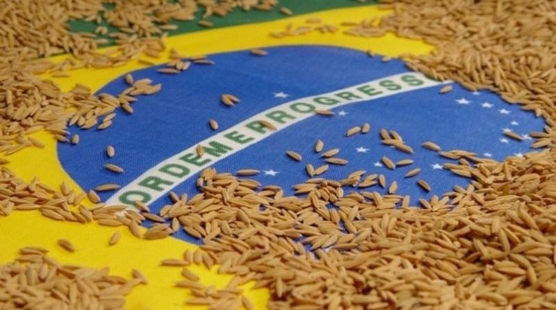 arroz bandeira brasil irga gov rs divulgacao