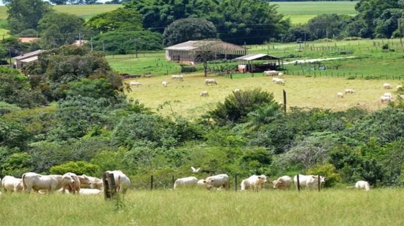 bovinos ilpf lilian alves embrapa 18 02 2020