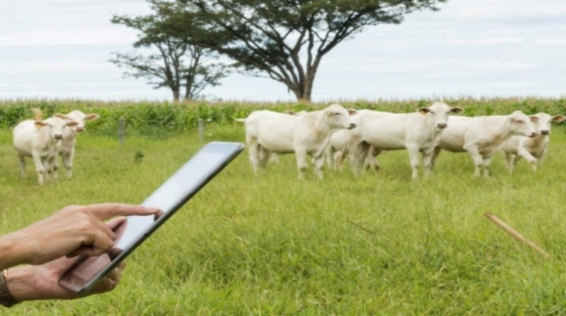 celular aplicativo campo bovino lilian alves embrapa