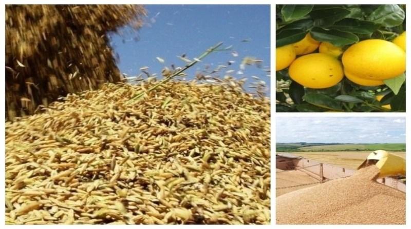 montagem arroz laranja trigo