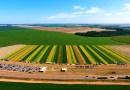 Alta produtividade e sementes de qualidade, o cenário da soja no DF