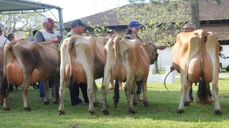 leite vacas produtores agrourbano divulgacao