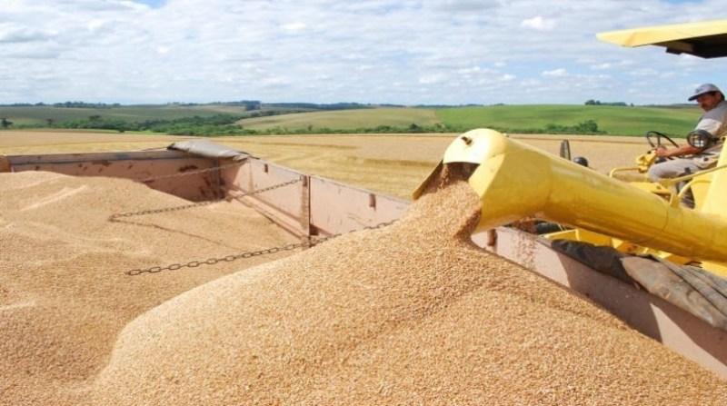trigo graos colheita paulo kurtz embrapa