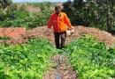 Agricultura familiar no DF e Entorno se reinventa na pandemia, diz Embrapa