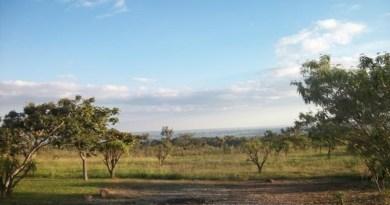 Semana do Meio Ambiente: CEPF e IEB intensificam ações em defesa do Cerrado
