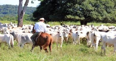Mosca-dos-chifres, uma ameaça aos rebanhos de corte e de leite