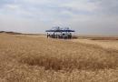 Trigo irrigado no Cerrado alcança recorde mundial de produtividade
